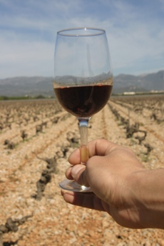 Mallorca Regional Wine - Balearic Islands - Agrifoodstuffs, designations of origin and Balearic gastronomy