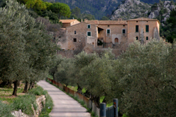 4 L'OLIVAR DE COMA-SEMA - Tours - Olive oil tourism - Balearic Islands - Agrifoodstuffs, designations of origin and Balearic gastronomy
